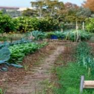 Taller de cultivos hortícolas ecológicos de invierno en Huertos del Túria