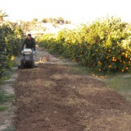 Labores del huerto mes a mes: Marzo, en Huertos del Túria