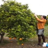 Nuestras naranjas llegan a Cantabria a través del Apadrinamiento