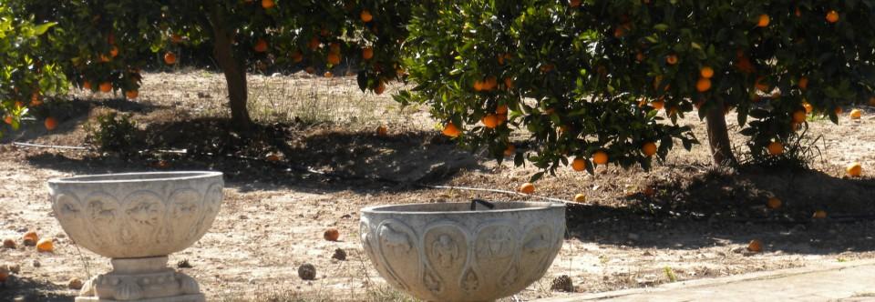 Regala EcoSostenibilidad: un naranjo en Huertos del Túria