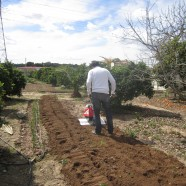 Labores del huerto mes a mes: Abril en Huertos del Túria