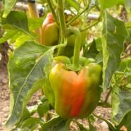 Tareas del huerto mes a mes: Mayo y Junio en Huertos del Túria