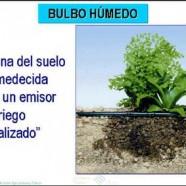 Consejos sobre cómo plantar en huertos con riego por goteo