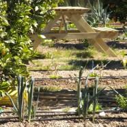 Labores del huerto mes a mes: Enero en Huertos del Túria