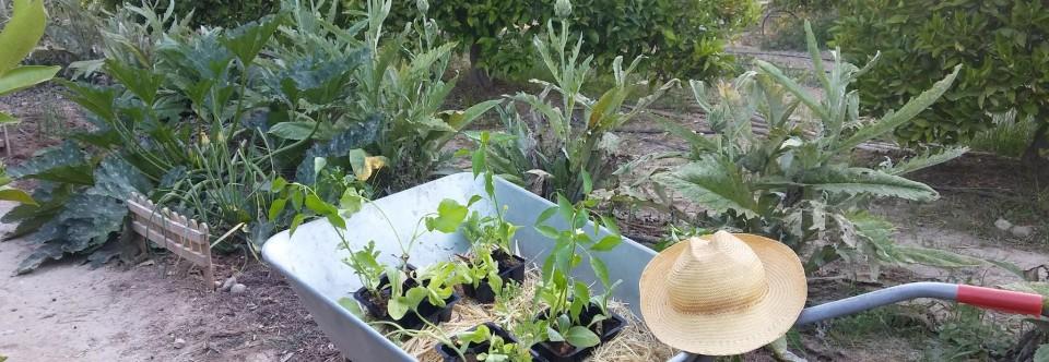 Labores del huerto mes a mes: Marzo en Huertos del Túria