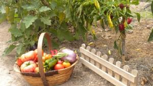 Tus verduras, del huerto a la mesa