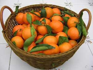 naranjas recogidas