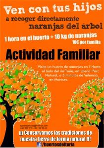Naranjas en Huertos del Túria