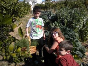 PequeHuerto, recogiendo verduras