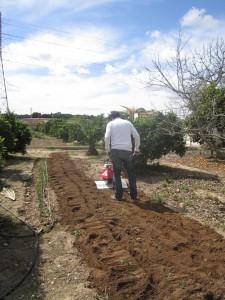 Preparando los huertos en Huertos del Túria