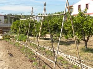 Entutorado de tomates en Huertos del Túria