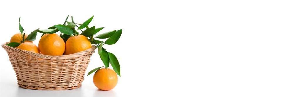 Excursión: Aprender a recolectar naranjas, en Huertos del Túria