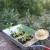huertos cultivos ecológicos